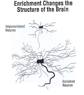 enriched-neuron