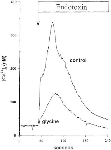 glycine_endotoxin